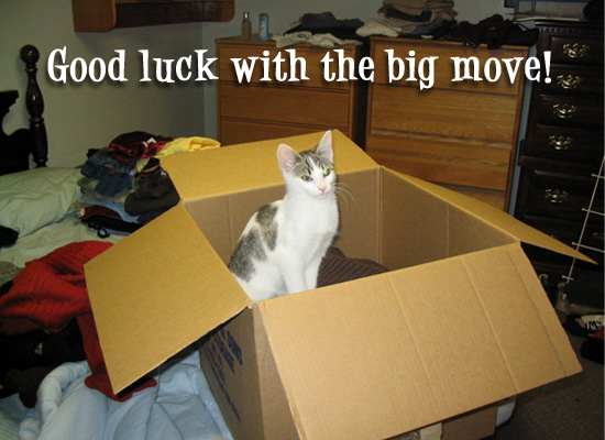 Moving - Cute Cat
